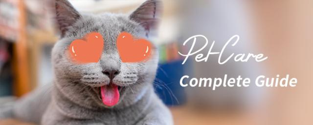 12 Best Things from Xiaomi Youpin to Buy for Complete Cat Care