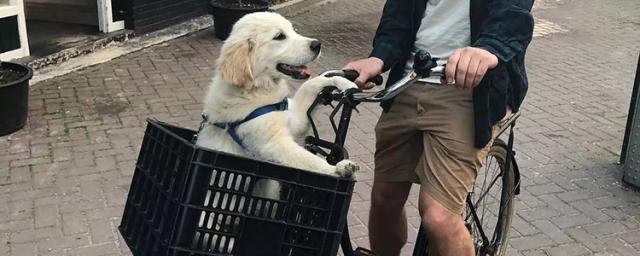Do You Want Such A Customized Bicycle For Both Dog & Owner?